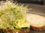 Avocado Spread & Alfalfa Sprouts Grilled Cheese